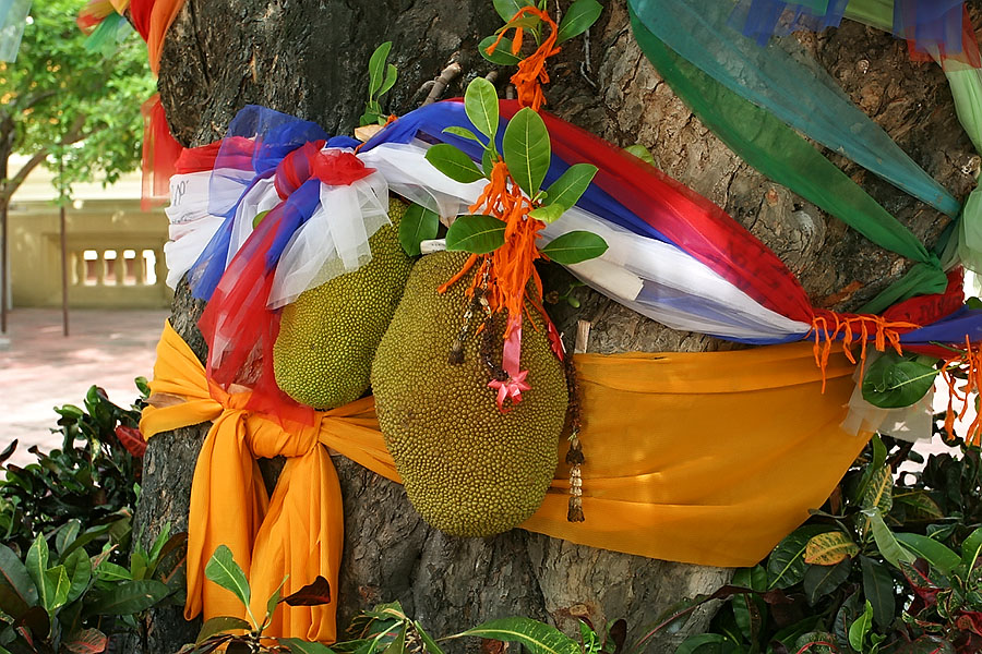 Evidence of Thailand's animist belief systems in the form of a decorated tree