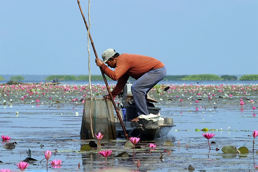 A local man fishing at Thale Noi, Phattalung province, Thailand