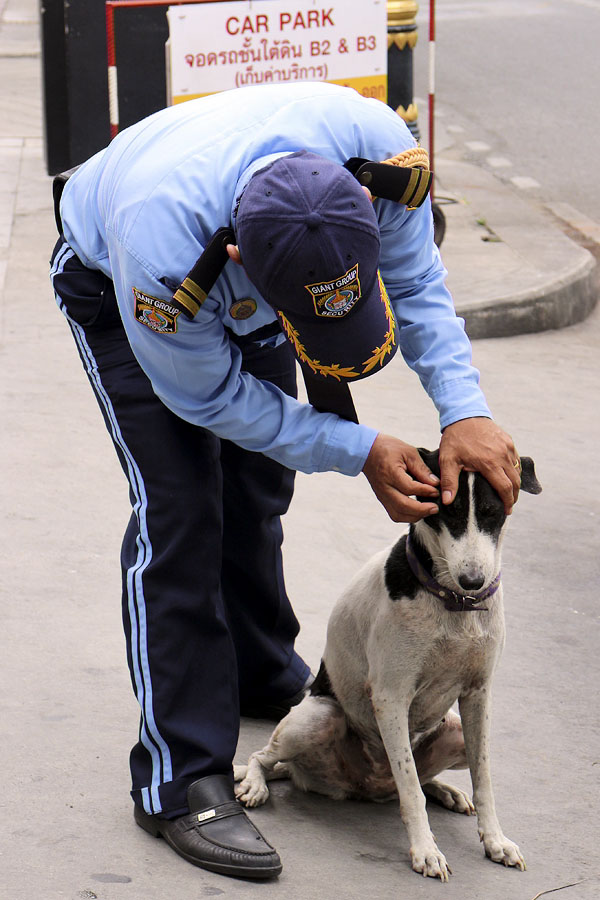 Thai security guard taking care of a street dog