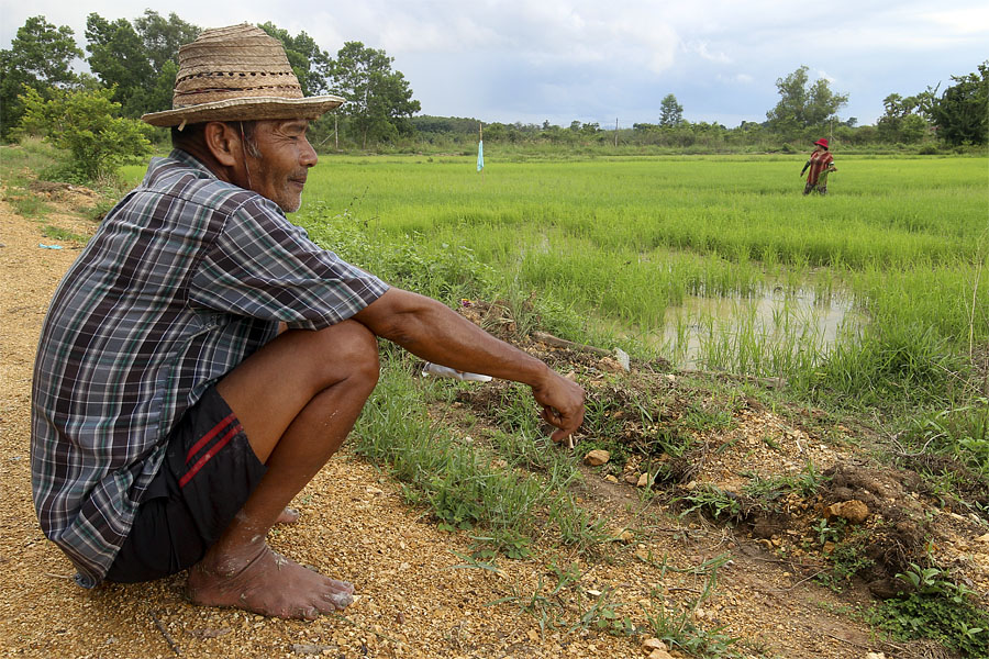Rice farmer in Hat Yai