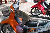 Thailand, a land filled with monkeys on motorbikes - Click for larger image