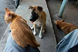 A feline on my lap with some canine friends - Click for larger image