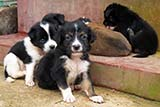 Twelve abandoned pups - Click for larger image